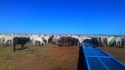 Quantidade e qualidade de água utilizada para dessedentação de bovinos.