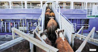 Abertura de novos mercados para a exportação de gado vivo