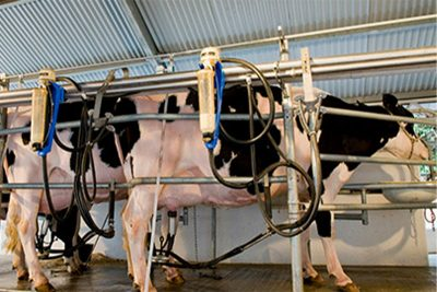 Lácteos: Abraleite pede à ministra suspensão imediata das importações do Mercosul
