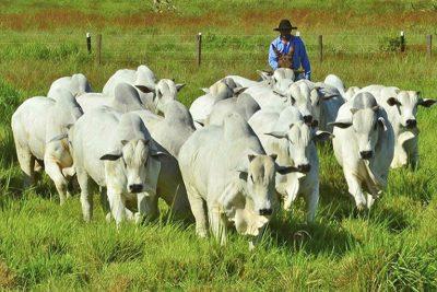 A importância da qualidade da água na produção de bovinos